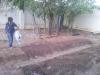 Ampliação de horta e plantio de mudas - Colégio Estadual Rui Barbosa - 20.11 e 29.11.14 - Juazeiro-BA
