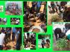 Alunos e Professores são mobilizados para arborização de escolas