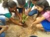 Arborização de escolas mobiliza mais de 100 pessoas