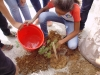 Arborização Mobiliza Alunos, Professores e Comunidade