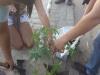 Atividade de arborização - Cólegio Modelo - Juazeiro-BA - 25.07 e 01.08.15