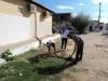 Atividade de Arborização na Escola Carmem Costa, Bairro Alto da Aliança - Juazeiro - BA, 20/09/2013
