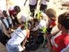 Atividade de Arborização comemora o Dia da Árvore