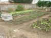 Atividade de Compostagem e Implantação da Horta Escolar na Escola Pe Luiz Cassiano - Petrolina-PE