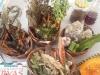 Palestra sobre plantas medidicinais - Escola Joca de Souza - Juazeiro-BA - 08.08.15