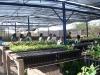 12-visita-ao-viveiro-do-crad-com-os-alunos-mobilizados-pelo-pev-centro-educacional-joao-xxiii-08-05-13