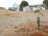 atividade-de-arborizacao-na-escola-nossa-senhora-rainha-dos-anjos-caic-bairro-cohab-iv-petrolina-pe-30-09-2013-10