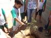 atividade-de-arborizacao-na-escola-prof-luiza-de-castro-ferreira-e-silva-bairro-jardim-sao-paulo-petrolina-pe-04-10-2013-34
