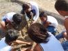 atividade-de-arborizacao-no-centro-social-urbano-juazeiro-ba-08-10-2013-13