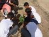 atividade-de-arborizacao-no-centro-social-urbano-juazeiro-ba-08-10-2013-5