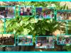atividades-do-pev-07-10-2014