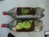 alunos-aprendem-a-fazer-jardineiras-com-pets-recicladas8-escola-anete-rolim-petrolina-pe-18-10-2012