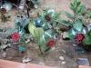 flores-recicladas-atividade-snct-escola-anesio-leao-petrolina-pe-18-10-2012