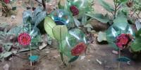Flores recicladas - Atividade SNCT - Escola Anesio Leao - Petrolina-PE (18-10-2012)